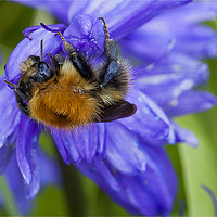 Buy canvas prints of Bumbling along and hanging on by Jim Jones