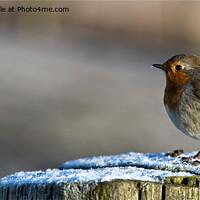 Buy canvas prints of Robin in Winter Sunshine by Jim Jones