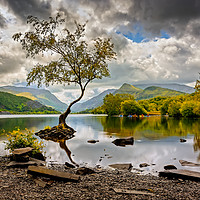 Buy canvas prints of Padarn lake Tree Llanberis  by Adrian Evans
