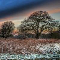 Buy canvas prints of A frosty morning in Norfolk by Gary Pearson