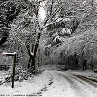 Buy canvas prints of Snow Day at St Ives Estate by Trevor Camp