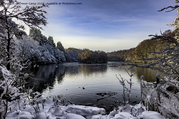 Coppice Pond Snow - 08 Print by Trevor Camp