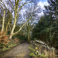 Buy canvas prints of Low Park Walk by Trevor Camp