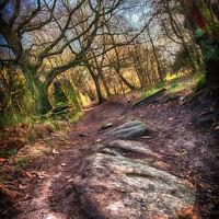 Buy canvas prints of A Rocky Path by Trevor Camp