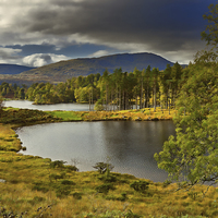 Buy canvas prints of Tarn Hows, Lake District, Cumbria by Louise Heusinkveld Canvas Prints