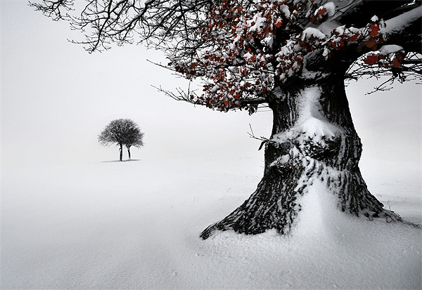 Oak in the snow Canvas print by Robert Fielding
