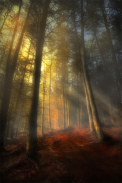 The rays of autumn Canvas print by Robert Fielding