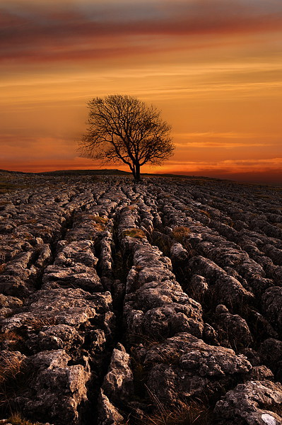 Malham tree sunrise Canvas print by Robert Fielding