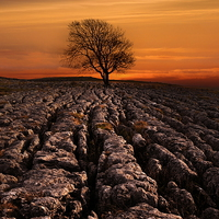 Buy canvas prints of Malham tree sunrise by Robert Fielding