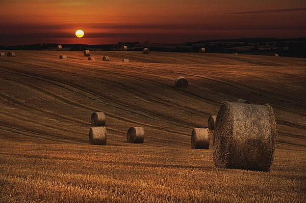 Harvest sunset Canvas print by Robert Fielding