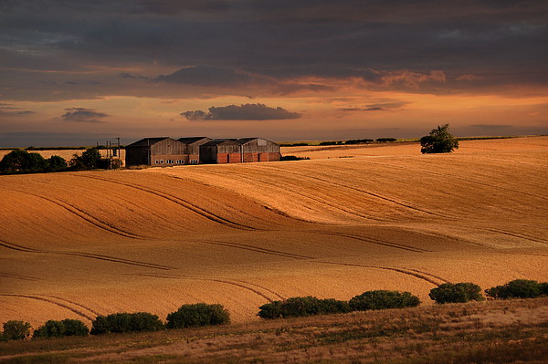 last light over the wheat fields Canvas print by Robert Fielding