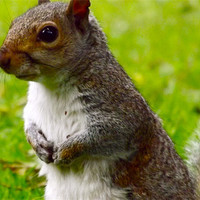 Buy canvas prints of Hungry Squirrel by LucyBen Lloyd