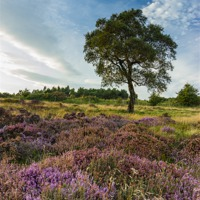 Buy canvas prints of Heather and Hawthorn by Angie Morton