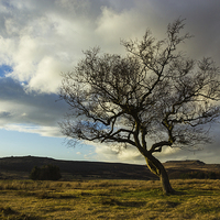 Buy canvas prints of Hawthorn Isolation by Angie Morton