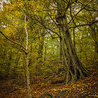 Buy canvas prints of Autumn in Loxley Valley by Angie Morton