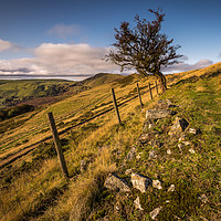 Buy canvas prints of Lonely Hawthorn by Angie Morton
