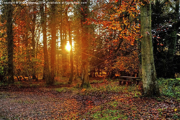 Forest of Dean Canvas print by Diana Mower