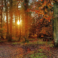 Buy canvas prints of  Forest of Dean by Diana Mower