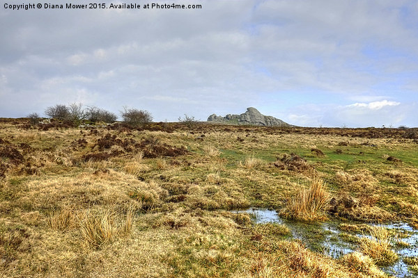 Haytor Dartmoor  Canvas Print by Diana Mower