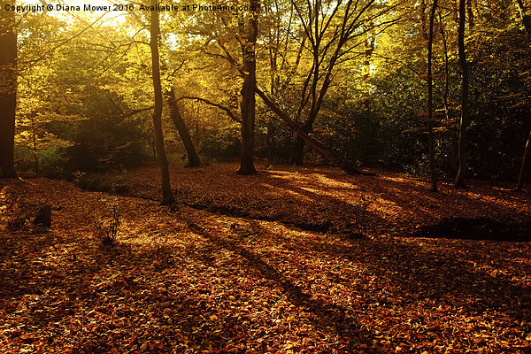 Autumn Sunlight Epping Forest  Canvas print by Diana Mower