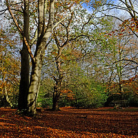 Buy canvas prints of Epping Forest by Diana Mower