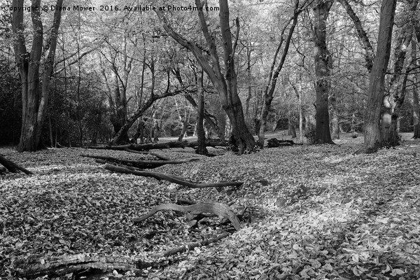 Epping Forest Canvas print by Diana Mower