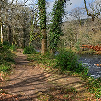 Buy canvas prints of The River Dart by Diana Mower