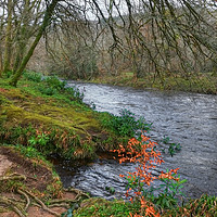 Buy canvas prints of On the banks of the River Dart by Diana Mower