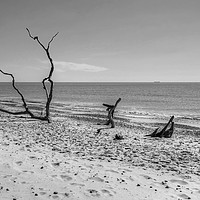 Buy canvas prints of Covehithe Beach Monochrome by Diana Mower
