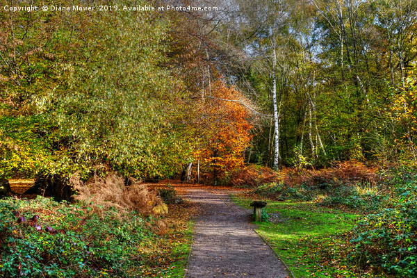 The Beech Trail Epping  Canvas print by Diana Mower