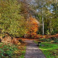 Buy canvas prints of The Beech Trail Epping  by Diana Mower