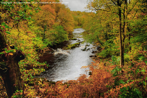 Autumnal River Wharfe Bolton Abbey Canvas Print by Diana Mower