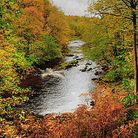 Buy canvas prints of Autumnal River Wharfe Bolton Abbey by Diana Mower