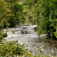 Buy canvas prints of The Waterfalls at Bainbridge Yorkshire. by Diana Mower