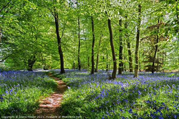 Bluebell Wood in England Print by Diana Mower