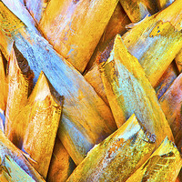 Buy canvas prints of Coconut Royal Palm Bark Texture by Arfabita
