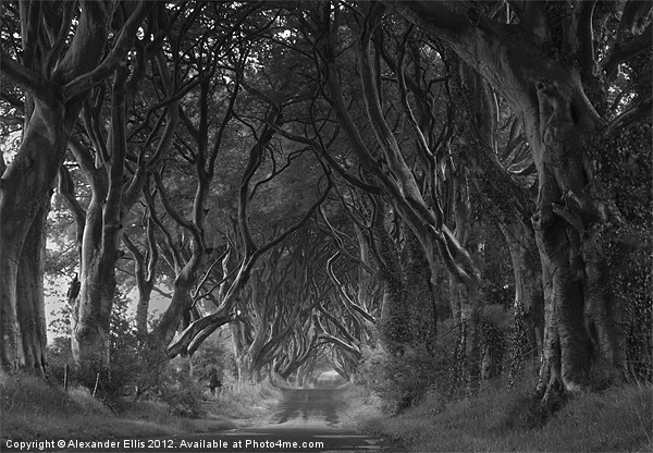 The Dark Hedges Canvas print by Alexander Ellis