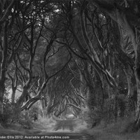 Buy canvas prints of The Dark Hedges by Alexander Ellis