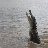 Buy canvas prints of Jumping Crocs by Cristal Hills