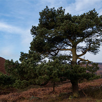 Buy canvas prints of Tree on Moscar Moor by Jonathan Swetnam