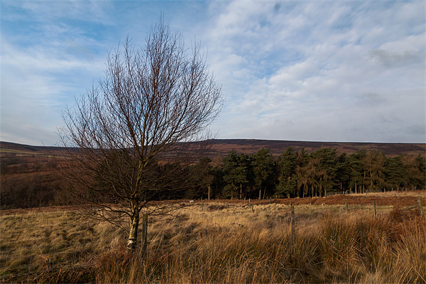 Moscar Moor Tree Canvas print by Jonathan Swetnam