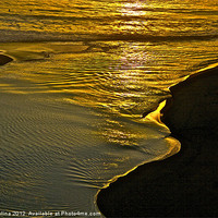Buy canvas prints of Golden Water by Nik Catalina