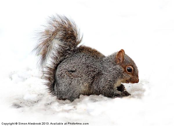 Grey Squirrel Canvas print by Simon Alesbrook