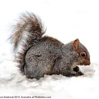 Buy canvas prints of Grey Squirrel by Simon Alesbrook