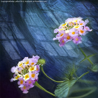 Buy canvas prints of Harmony by Betty LaRue Canvas and Prints