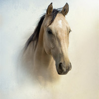 Buy canvas prints of Mister Buckskin by Betty LaRue Canvas and Prints