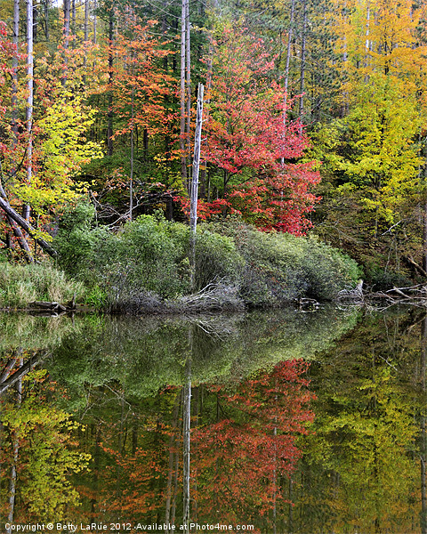 Pond Autumn Reflections Framed Mounted Print by Betty LaRue Canvas and Prints