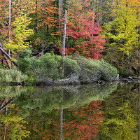 Buy canvas prints of Pond Autumn Reflections by Betty LaRue Canvas and Prints