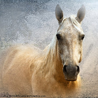 Buy canvas prints of Palomino by Betty LaRue Canvas and Prints