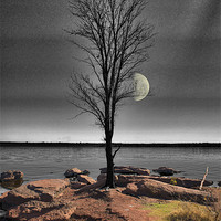 Buy canvas prints of The Lone Tree by Betty LaRue Canvas and Prints